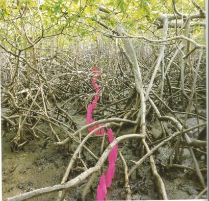 Nils Udo Dans les mangroves Tryptique part2 Résidence du FRAC Martinique 1991