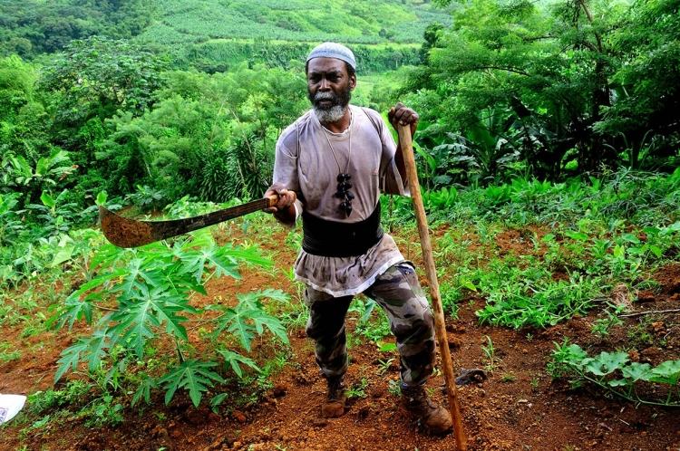 Roland Pavilla, dans son jardin du quartier Pain de Sucre. Marigot, Martinique, 18 juillet 20101.